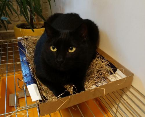 Oststnio filut ciagle spał w klatce Lolka na jego sianie, więc zrobiłam mu łózko pietrowe..