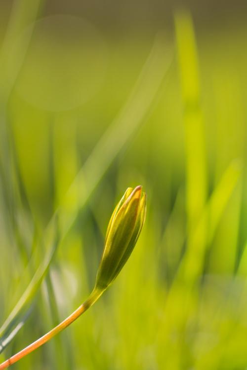 Wiosenne w trawie maziaje