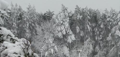 Radomsko,wiosna 2017r