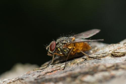 Troszkę cieplej i muchy się wygrzewały na pniach drzew