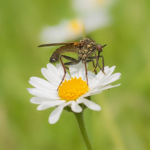 Wyspecjalizowany zbieracz pyłku :))