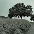 zepak i drzewo