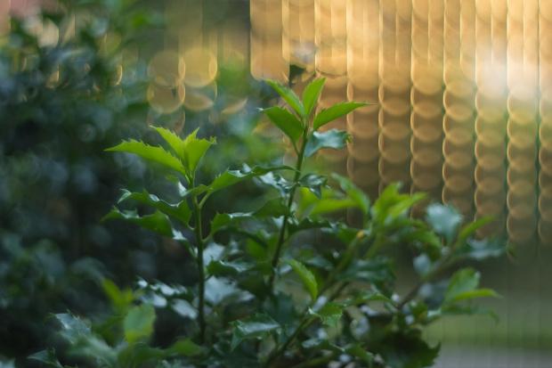 W moim ogrodzie...