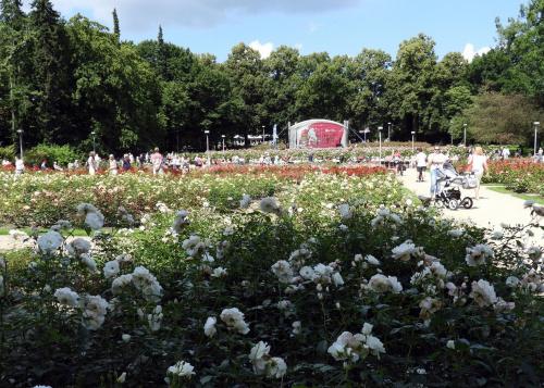 Ogród Różany w Szczecinie.