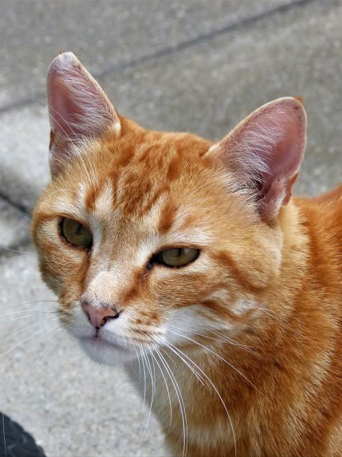 Smutny kot.Pozostawiony na dwa tygodnie,co prawda dokarmiany ale smutny.