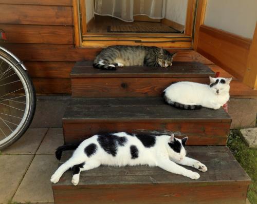 Już się pogodziłam z tym, że na działce rządzą ONE,,, ale ja też chciałabym czasem wejść do domku !