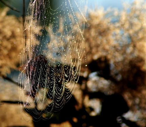 wczesno jesienne pajęczynki ...