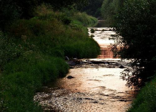 złota rzeka - Opava