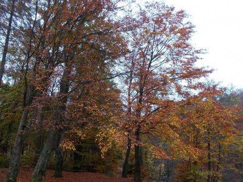 Kolory jesieni