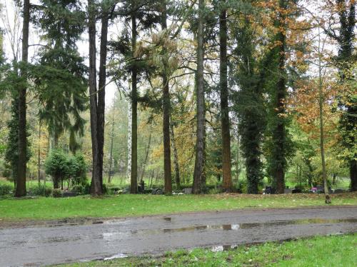 Cmentarz Centralny w Szczecinie przypomina park. Jest tutaj bardzo zróżnicowany i bogaty starodrzew,