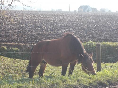 Smaczna trawa to i drut kolczasty w szyi nie przeszkadza :-)