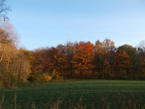 Jesienny landszaft