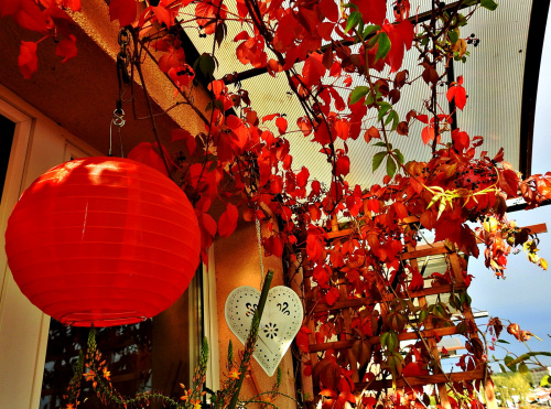 balkonowa jesień ...