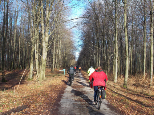 Wjeżdżamy do lasu na białą drogę