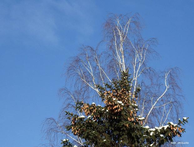 wiosenne nieba błękity ...