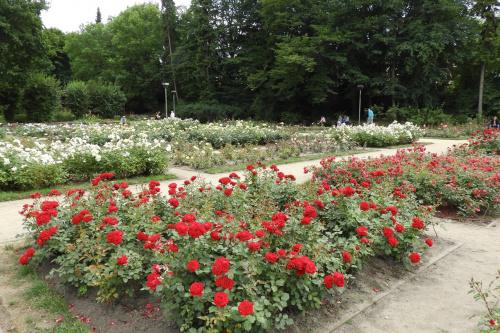 W Różanym Ogrodzie.
