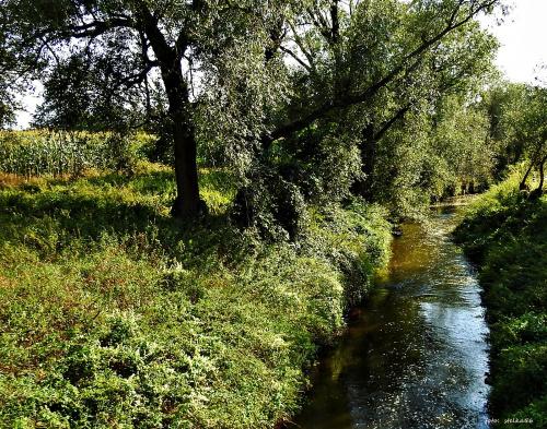 Rzeka Bierawka ...