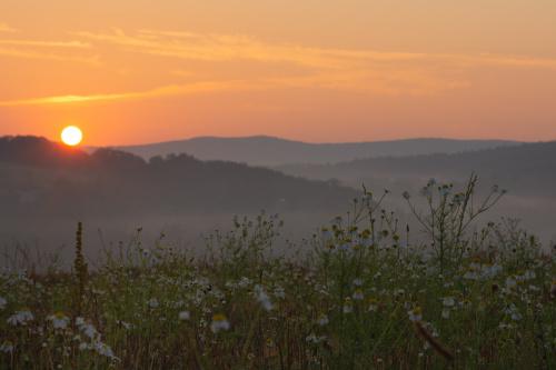 Rumiankowy wschód słońca