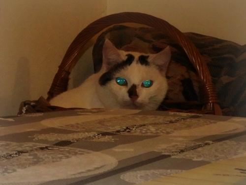 """"""" Oczy tej małej to dwa błękity """".."""