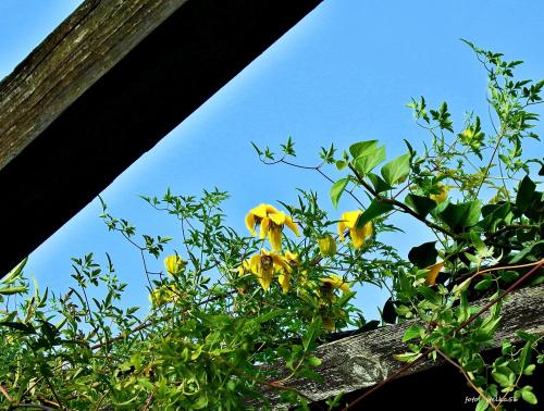 W ogrodzie :)