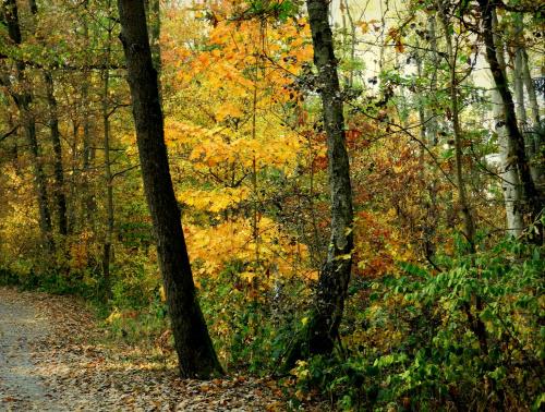 Pięknie jest w lesie ;