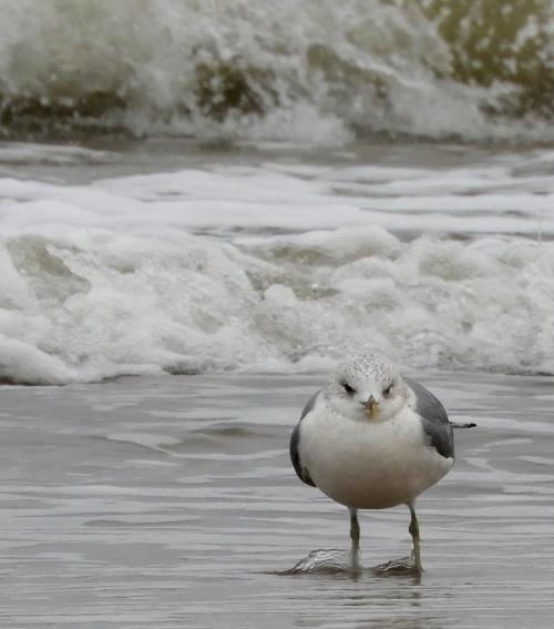 """"""" Co się gapisz ? pingwina nie widziałaś ? """""""