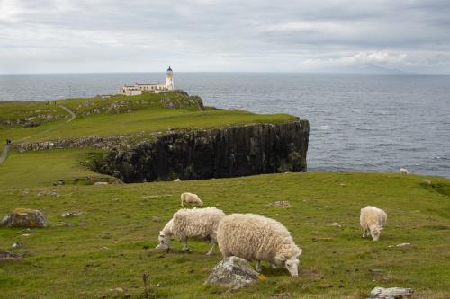 Jak Szkocja, to i owce. Można je spotkać niemal wszędzie w górach. Co gorsze, na drogach też...