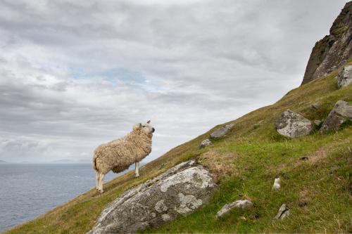 Owca...to dumne stworzenie