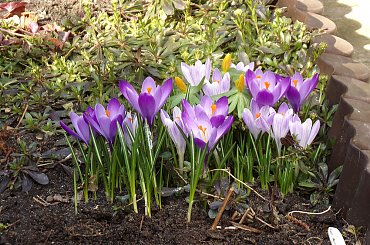 W moim ogrodzie... :-)
