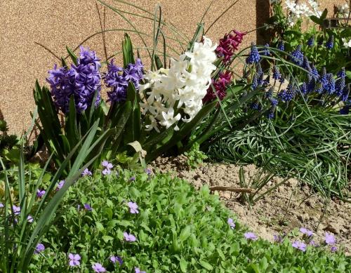 Wiosna na całego !
