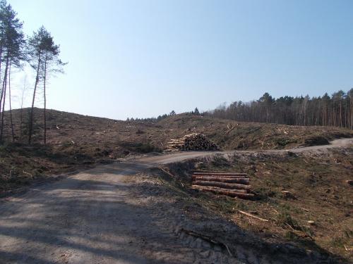 Szerokośc wyrębu to około 200 metrów. Na razie, bo sporo drzew stoi, ale są ogrodzone płotem.