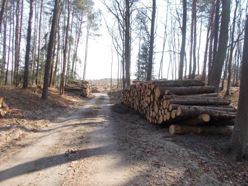 Ścieżka rowerowa wzdłuż Mierzei Wiślanej. Odcinek Kąty Rybackie-Krynica Morska. Brak drzew i robi się jasno.