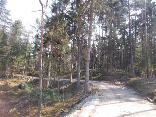 Ścieżka rowerowa wzdłuż Mierzei Wiślanej. Odcinek Kąty Rybackie-Krynica Morska. Powrót do lasu cieszy.