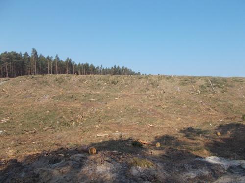 Smutny krajobraz, chociaż w sumie to tylko były sosny.