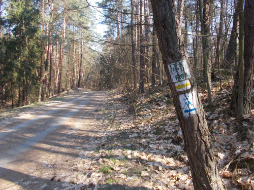 Ścieżka rowerowa wzdłuż Mierzei Wiślanej. Odcinek Kąty Rybackie-Krynica Morska.