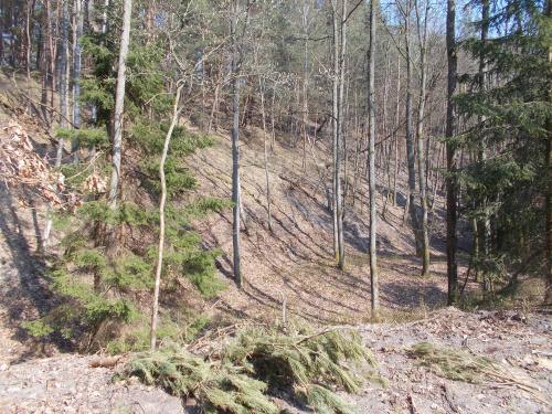 Ścieżka rowerowa wzdłuż Mierzei Wiślanej. Odcinek Kąty Rybackie-Krynica Morska. Niektóre wydmy osiągają słuszne wymiary.
