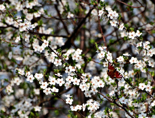 Wiosna nad akwenem Dębowa ...