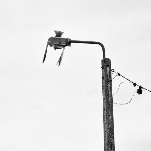 Odlotowa latarnia...z dedykacją dla Myszy :)))