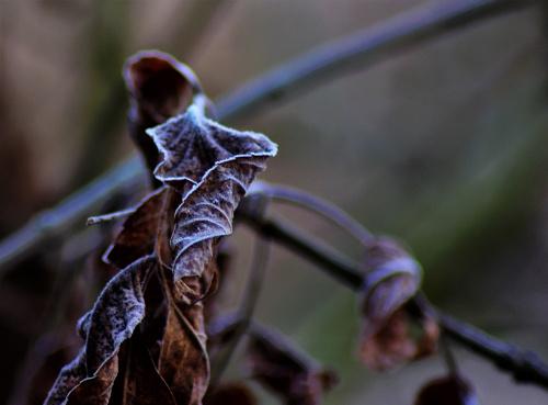 jesień zimą