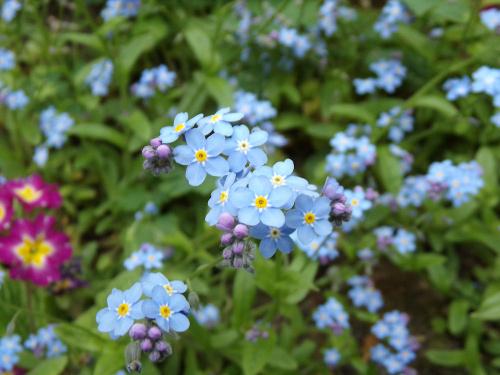 Ładne kwiatki...