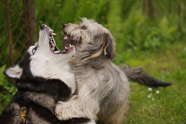 psie zabawy :)