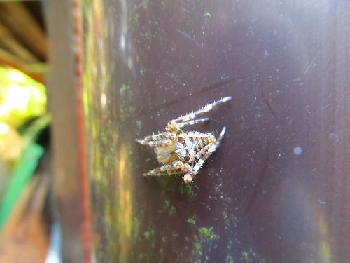 Spider :-)