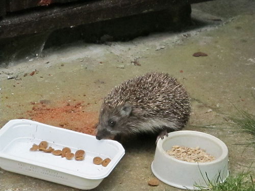 Smakosz-głodomorek :-)