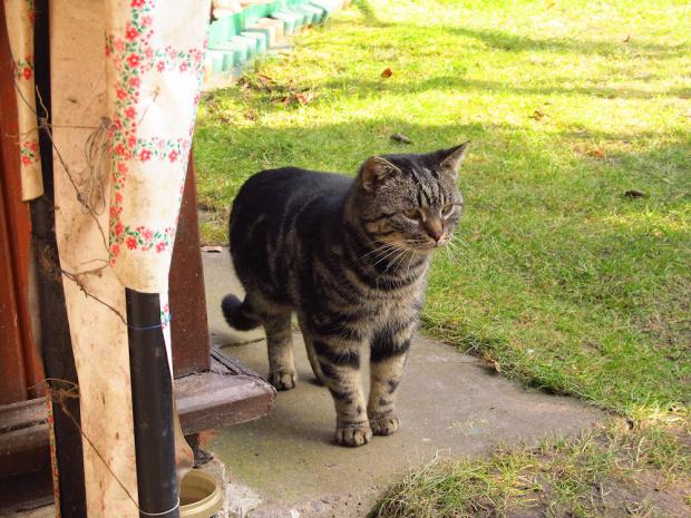 Mr Mruczuś ... zapatrzył się na jakąś kotkę, czyli wiosna idzie :-)