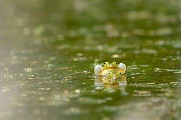 Żaby i inne płazy