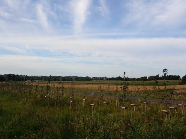 Zaczyna się nowy odcinek DW 507. Trzy rzędy drzew dadzą cień, ale czy my go doczekamy? ;-)