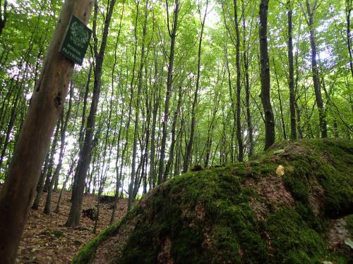 Wielki Kamień (Kamień Piramida) jest pomnikiem przyrody nieożywionej. Chociaż życie na nim kwitnie ...
