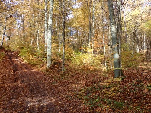 Na odcinku terenowym Weklice-Przezmark