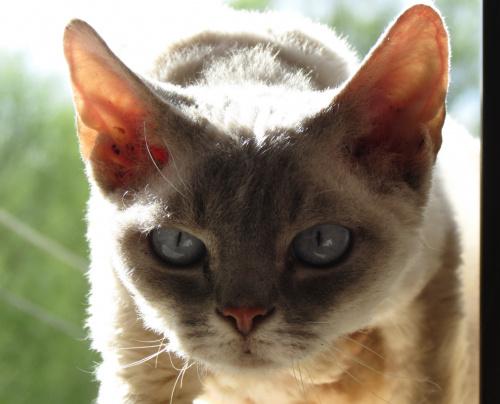 Kot jaki jest, każdy widzi..
